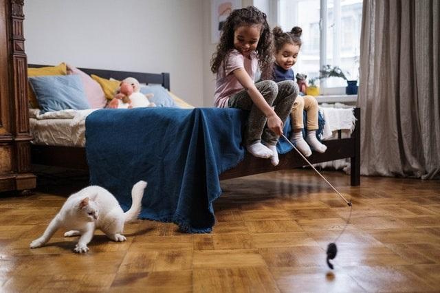 Mainan Kucing Lucu, Untuk Kucing Lucu Anda